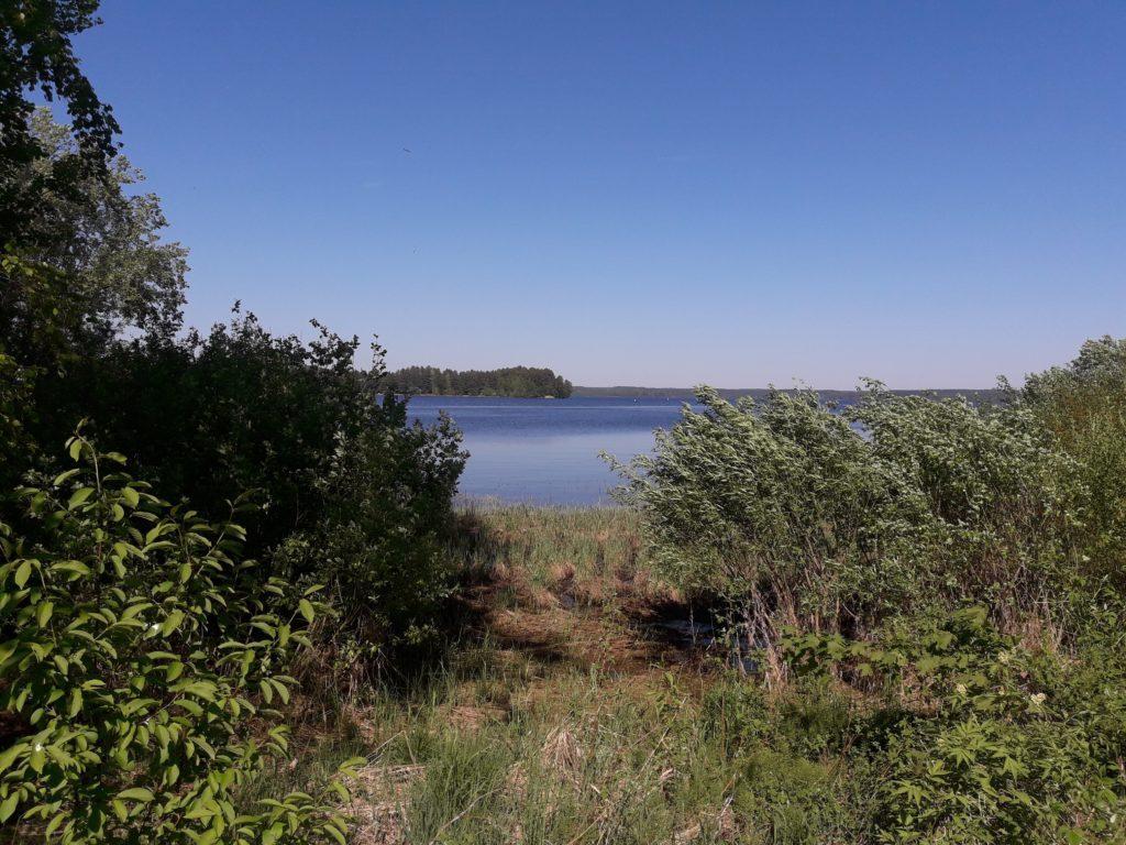 Kuvassa on suomalainen järvimaisema Ikaalisissa sekä tiheä rantakasvilluus.