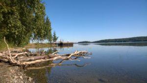 Kuvassa näkyy rannalta kaatuneita puita ja Längelmvesi näkyy taustalta.