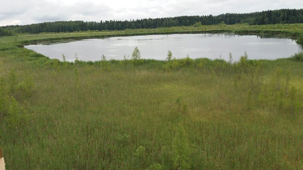 Näkymä Koijärven lintutornista ainoalle avovesialueelle 4.7.2018 (kuva: Jouni Riihimäki)