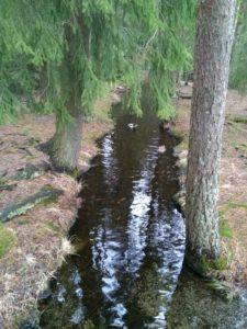 Kuva purosta. Kuva: Marko Koskinen