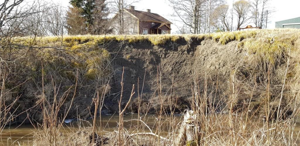 Kuvassa näkyvissä joen penkan eroosiota. Kuvaaja Satu Heino, KVVY ry